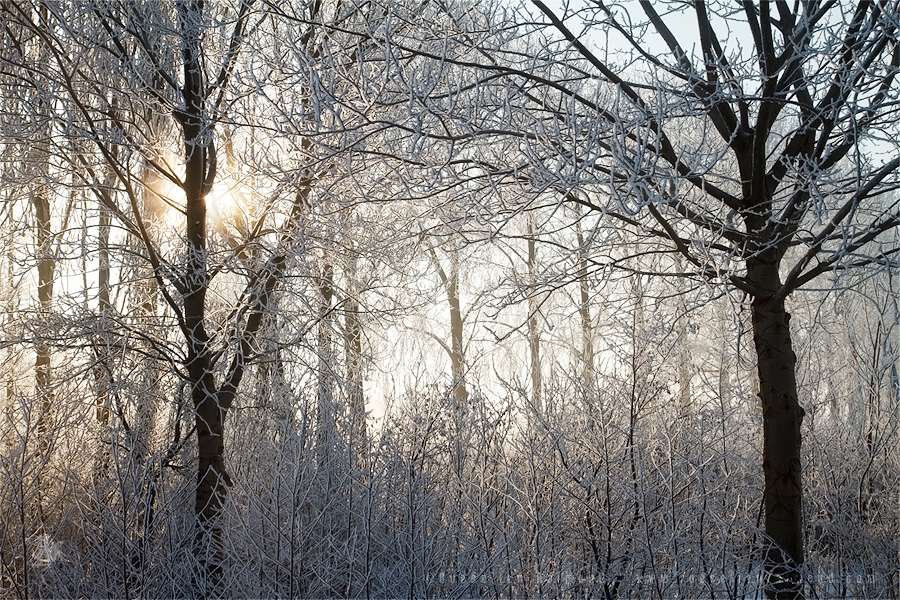 hoar frost rime cold winter