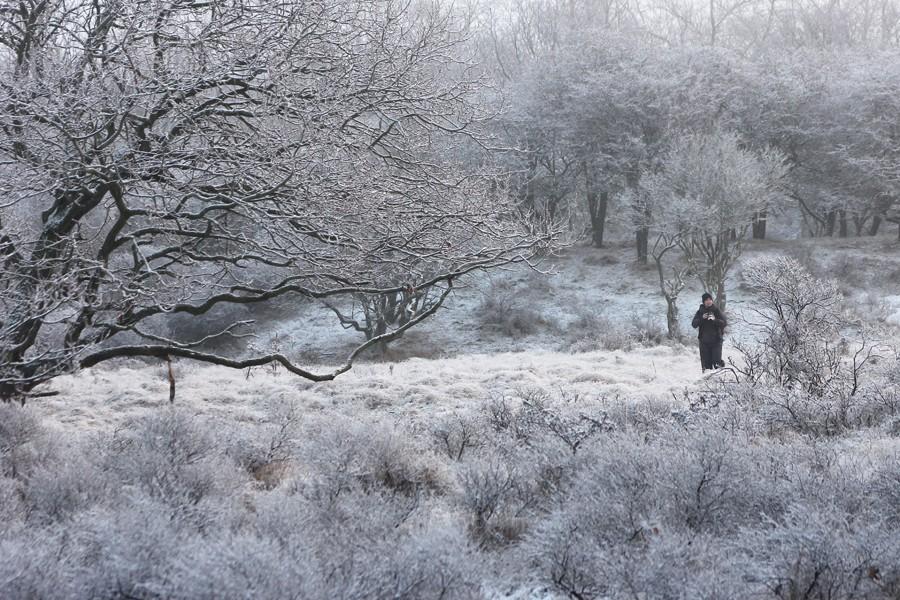 Roeselien snow hoar frost rime foxes