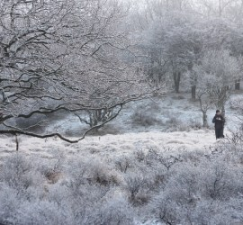 Roeselien snow hoar frost rime foxes