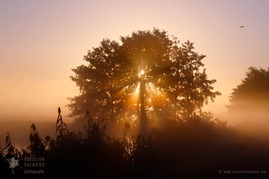 mist_sunrise