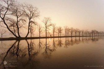 water repetitions trees bike
