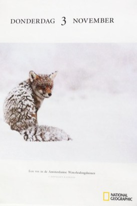 Publication National Geographic Calendar Red Fox in the Snow