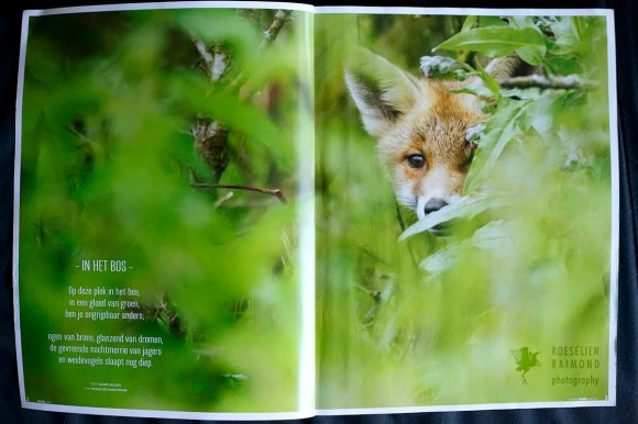 Fox kit publication in Roots Magazine