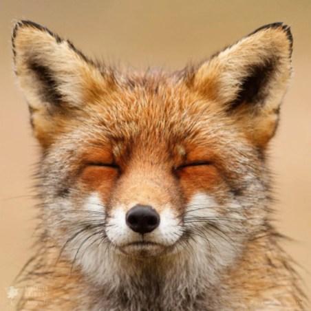 FOXY FACES