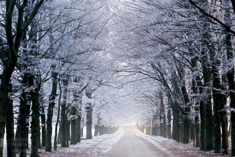 snow lane in the winter