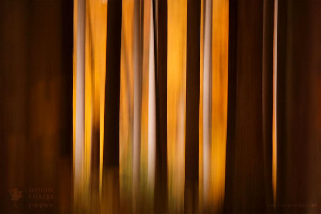 Blurred lines icm