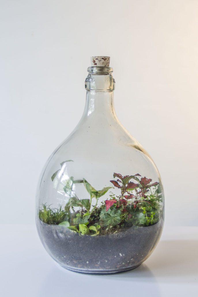 Planten in een fles  Roestplanten