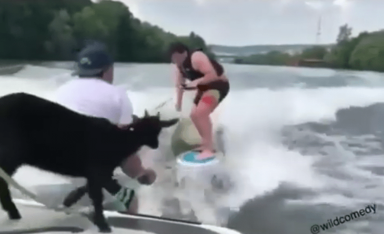 Goat on a Boat!