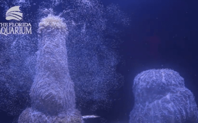 Coral Spawning in the Lab!