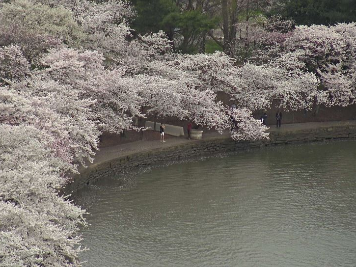 EarthCam-live-cam-of-Tidal-Basin-Cherry-Trees-march-20-2020