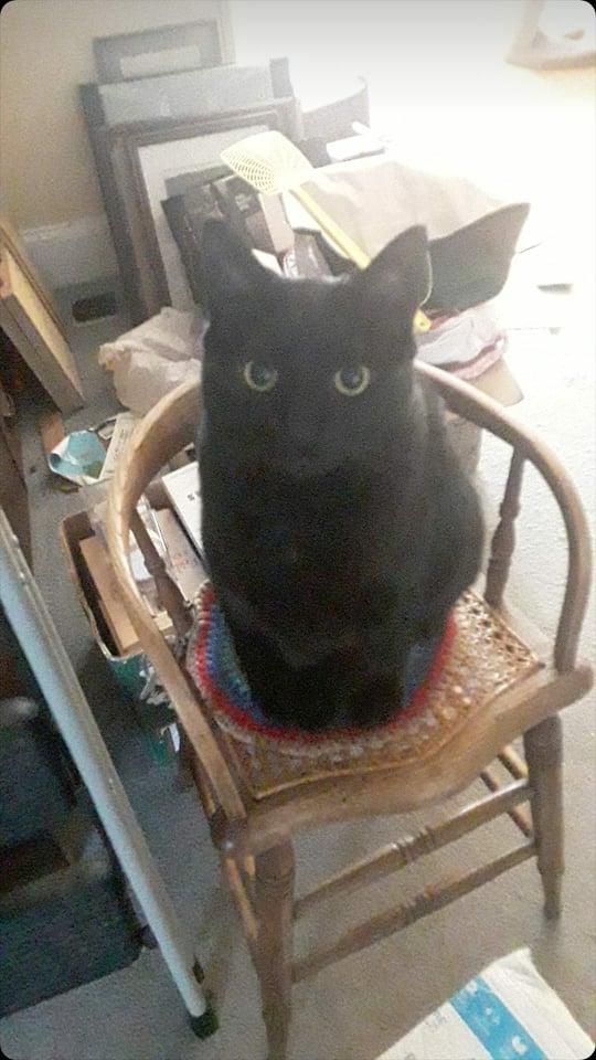Midnight on Olin chair