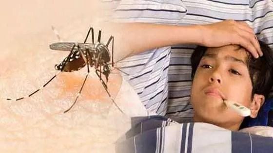 dengue-in-hindi