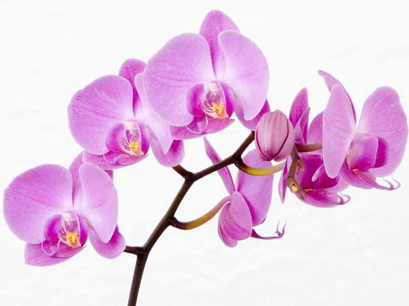 https://i0.wp.com/www.rogradini.ro/wp-content/uploads/2013/03/poze-imagini-flori-orhidee_08.jpg