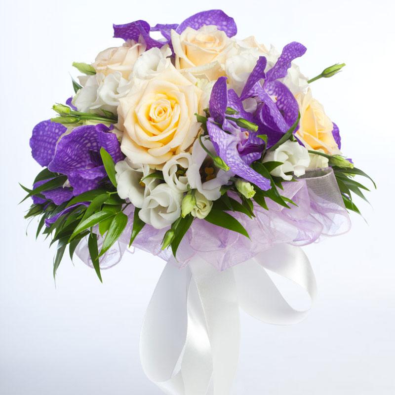 Flori Imagini Trandafiri Albi