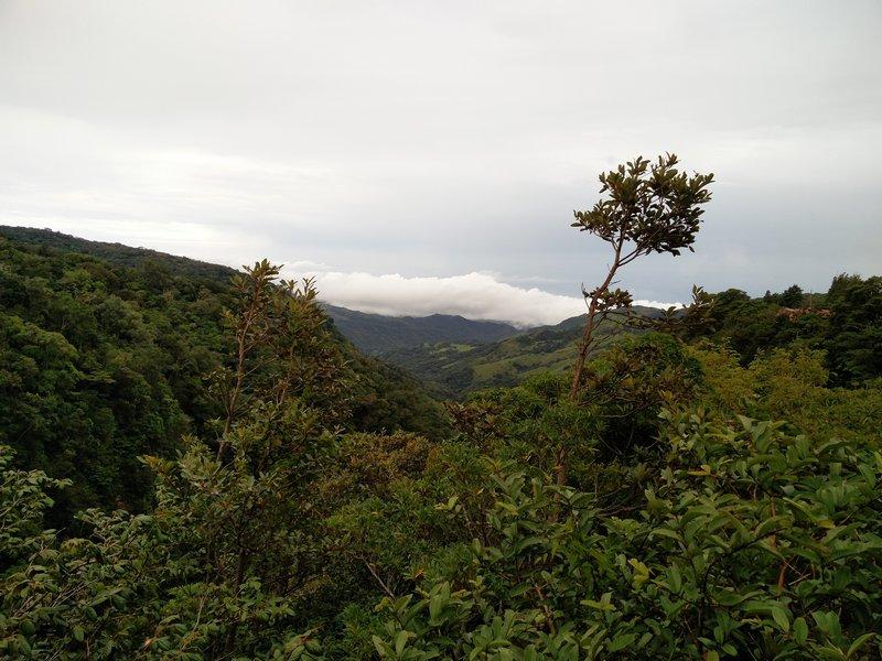 Musgo sobre musgo en La Fortuna y Monteverde