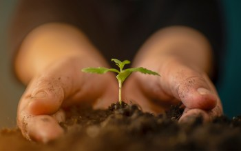 What is Sustainability Grown CBD