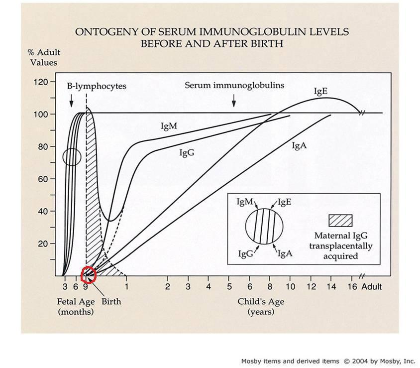 Immunoglobulin levels before and after birth