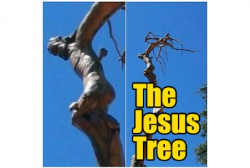 The Miracle Of The Jesus Tree Of Lebanon
