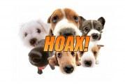 Pedigree Dog Adoption Hoax Hounds Lady