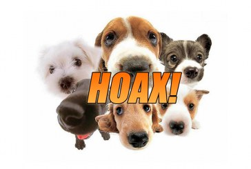 Pedigree Dog Adoption Hoax Hounds Lady