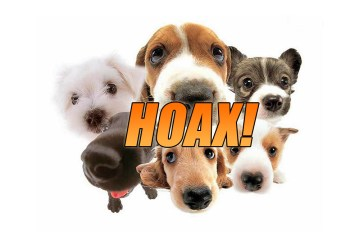 The Pedigree Dog Adoption Scam Debunked! Read + SHARE!