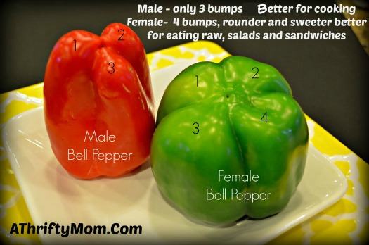 Do You Know If Your Bell Peppers Are Male Or Female?