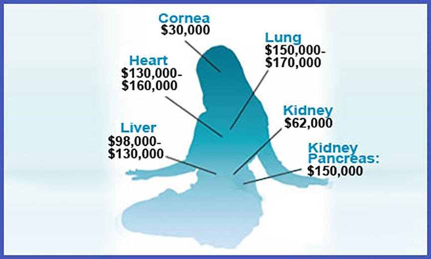 CITNAC Organ Prices In China