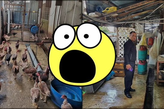 Illegal Chicken Processing Facility In Cheras Shut Down!