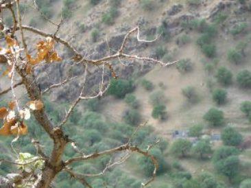 ئیلام ، وشكبوونی دارستان
