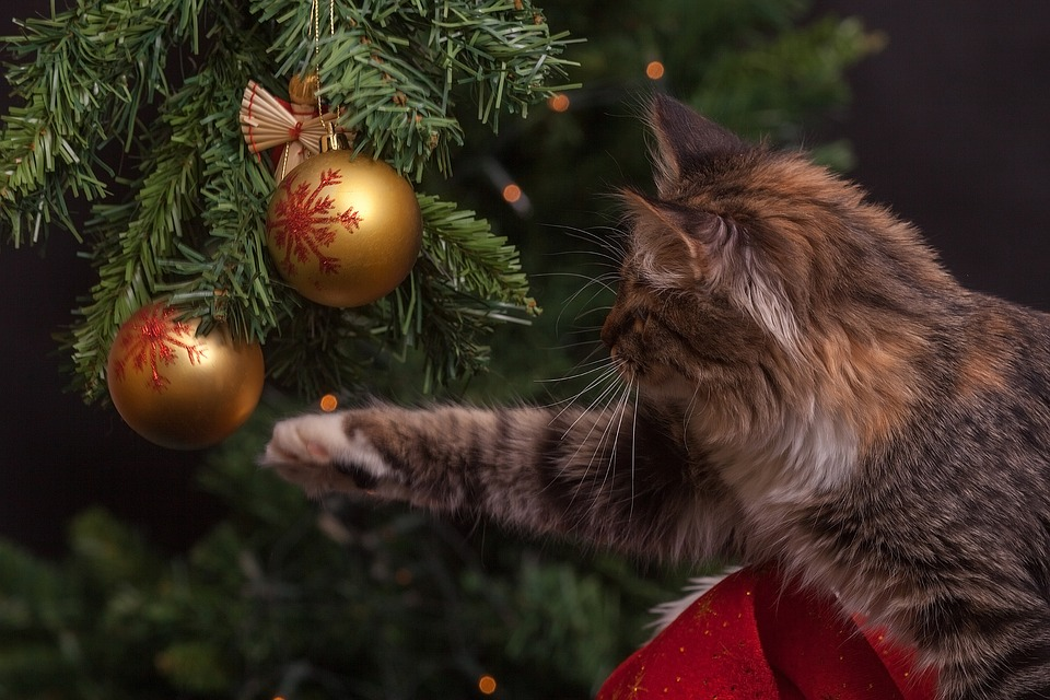 Običaj kićenja jelke: Nova godina je blizu kada jelke obuku svečanu odoru