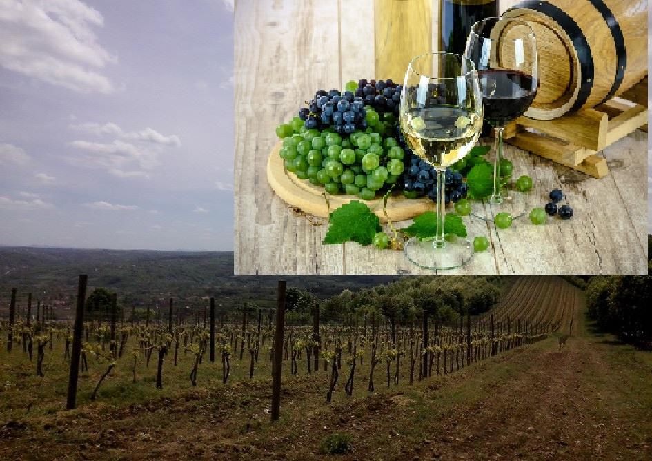 Orašac, Topola i Oplenac: Tamo gde se toči kraljevsko vino