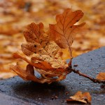 Povratak mladog sunca ili Hristovo rođenje: Žrtveni običaji iz pravere za najradosniji hrišćanski praznik