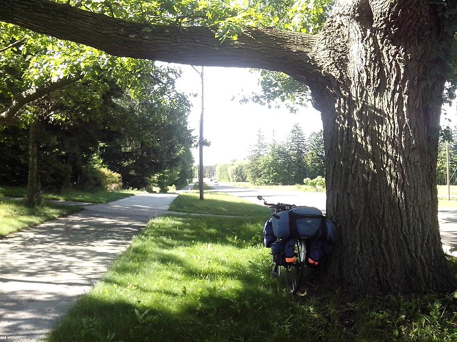 Blue Star Hwy, path, massive tree trunk
