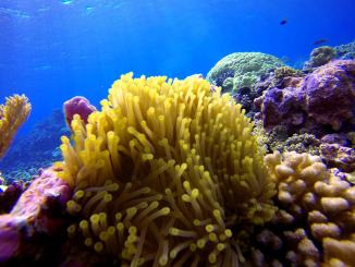 Coral Reef Tourism worth $36 Billion Year