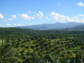 Palm oil giant commits end deforestation