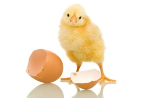 Money: the chicken or egg argument