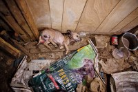 The Dog Factory: Inside the Sickening World of Puppy Mills ...
