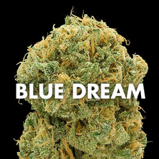 Blue Dream Marijuana for sale online | Buy blue dream marijuana online