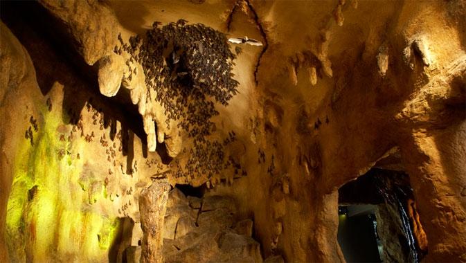 Kids Fall Wallpaper The Bat Cave Royal Ontario Museum