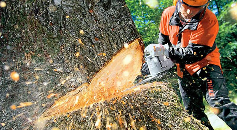 Abbattimento alberi privati nel Comune di Roma
