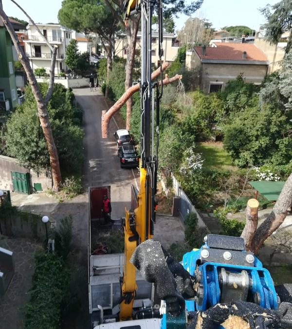 L'abbattimento controllato degli alberi in città