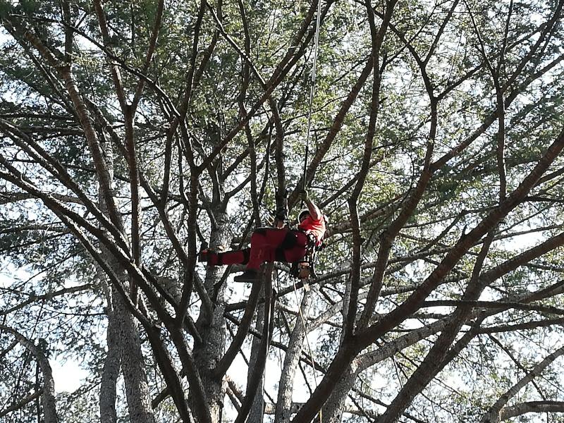 potatura cedro tree climbing