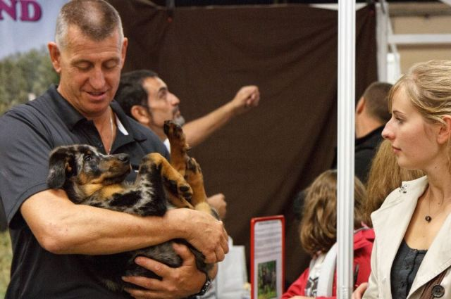 Animal Expo - Concours Canin