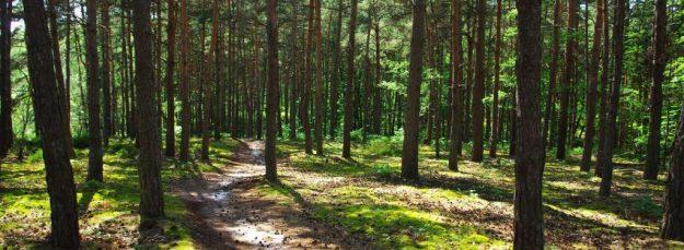 Forêt Vallée de Chevreuse
