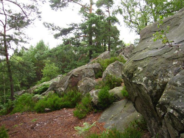 Forêt et rochers Parc Régional de la Vallée de Chevreuse