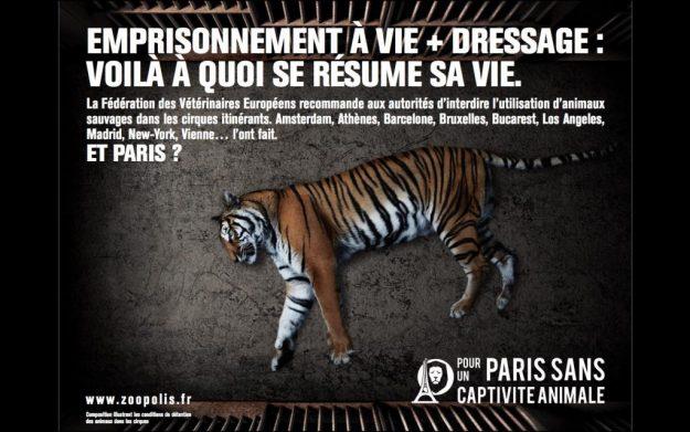 Interdiction des animaux dans les cirques, association Zoopolis