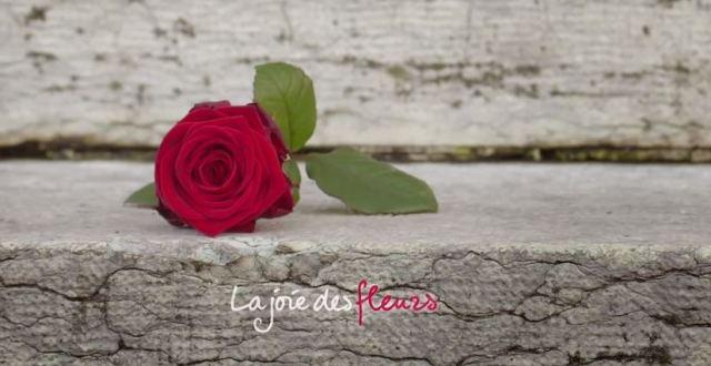 La joie des fleurs