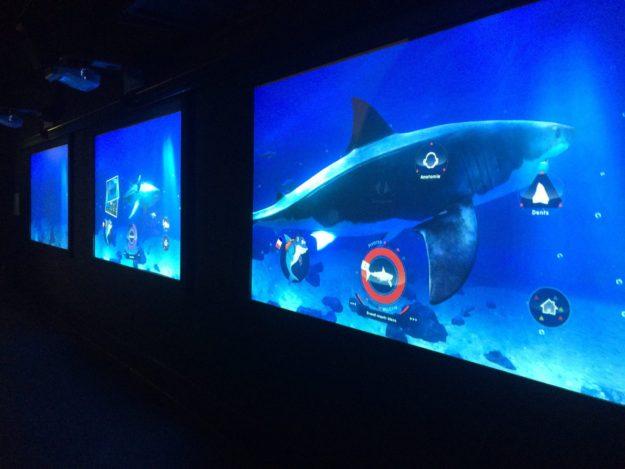 Ou voir des requins à Paris Aquarium Sea Life Val d'Europe