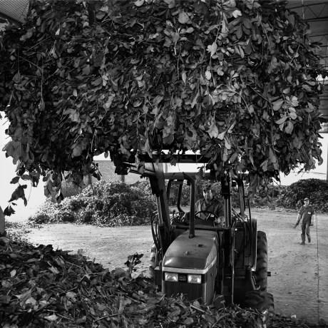 Luis on Tractor, 2000. Gelatin silver print, 16x20