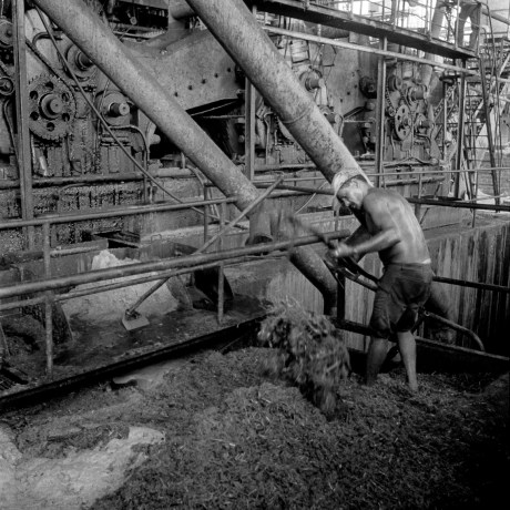 Raking Cane Pulp, 1992. Near João Pessoa, Paraíba, this sugar refinery produces brown sugar (demerara) for export, and distilled alcohol for domestic use. By law, the refineries can only sell alcohol to the government, yet they (Petrobrás) only buy 10% of the output, leaving the rest to evaporate.